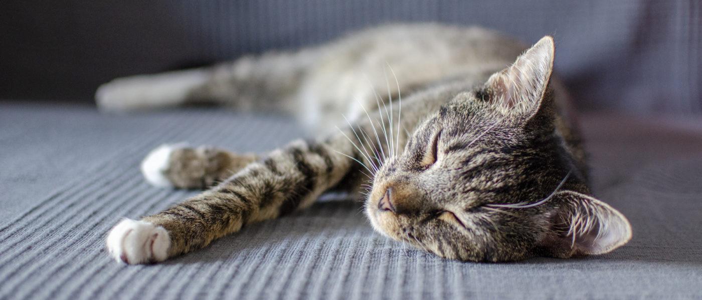 sleeping-cat-4GRPR3B